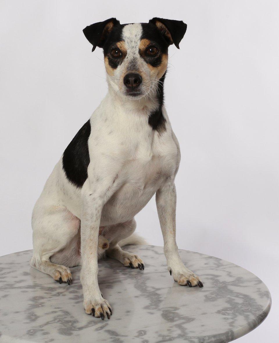 Hundetraining Einzelstunden