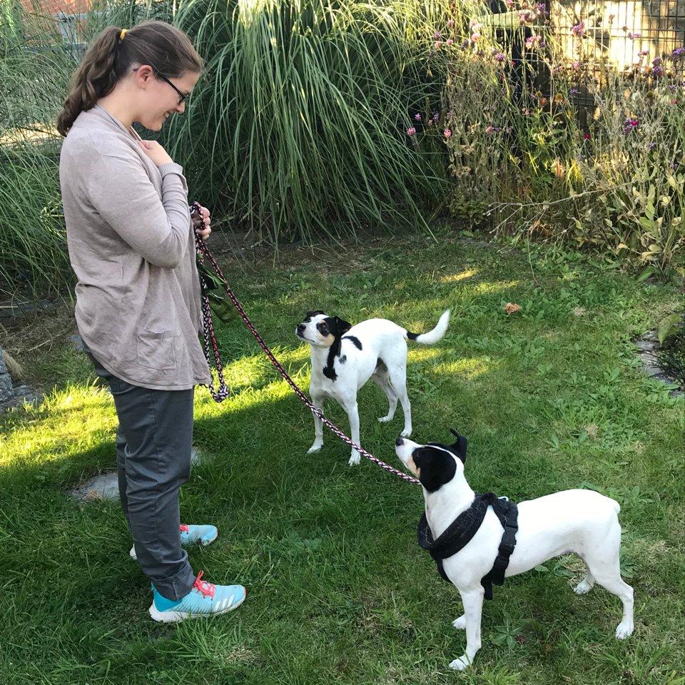 Hundetraining Gruppenstunde