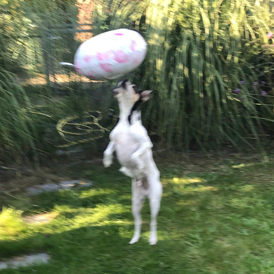 Hundetraining - Trickkurs